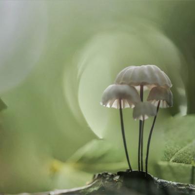 Quelques champignons
