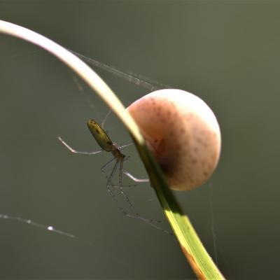 Araignée et l'escargot