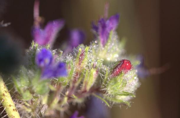 Fleurs perlées