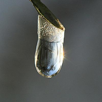 Perle gelée