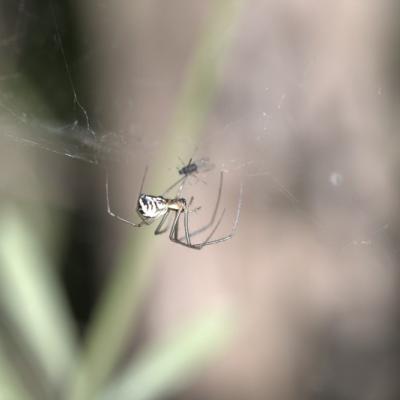IMG_6829.CR2 Archnidaes