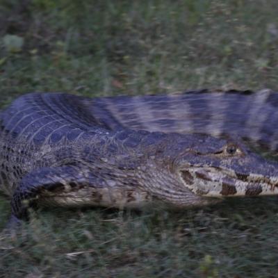 Pantanal, Brésil